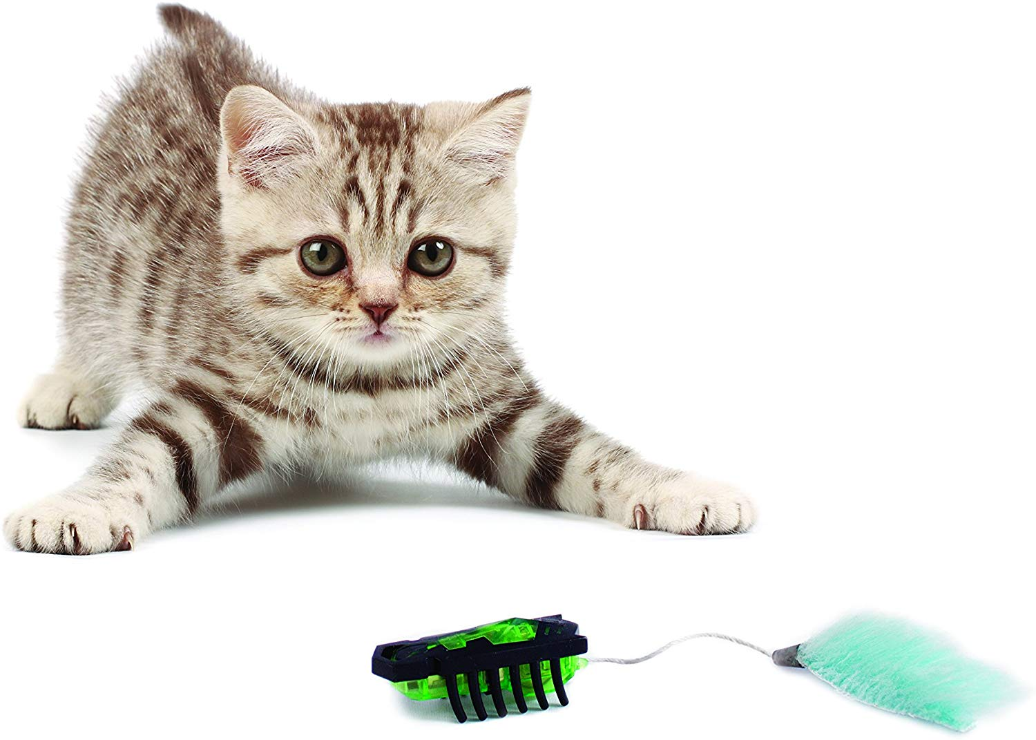 3 Top Robot Toy For Cats To Keep Them Entertained For a Long time